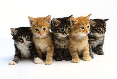 Pet Insurance for Cats